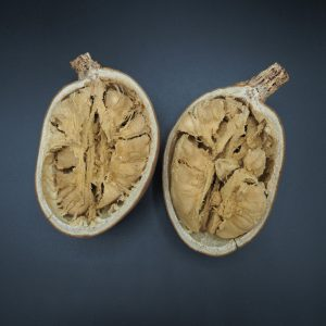 Plod Adansonia rubrostipa fony 2