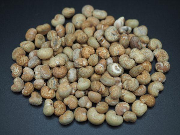 Semená adansonia gregorii